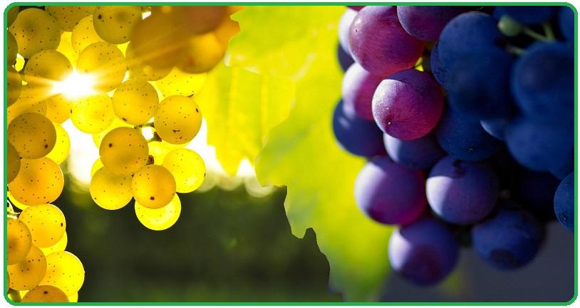 Вино из листьев винограда в домашних условиях простой рецепт 113